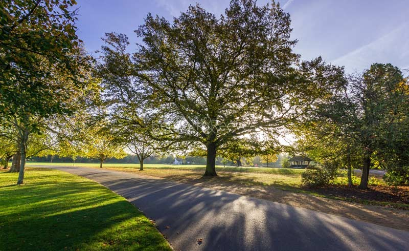 Dulwich Area Guide - Image 2